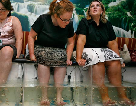 Fish pedicures for Fish pedicure dc