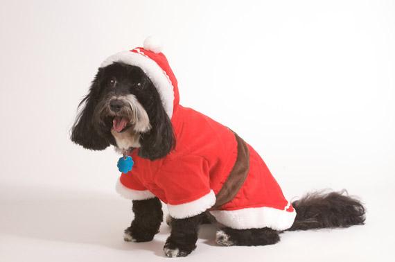 Doggie-santa-suit