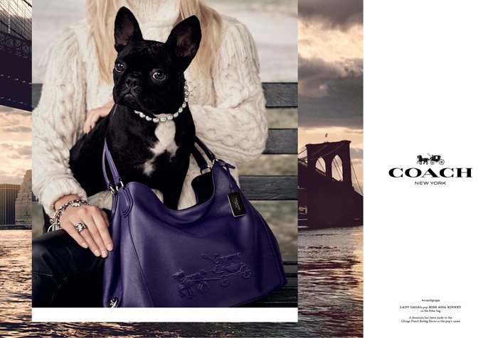 Lady Gaga's Dog Miss Asia Kinney for Coach Pups Campaign